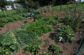 Jardin potager - 1
